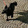 Dog at the Residenzplatz